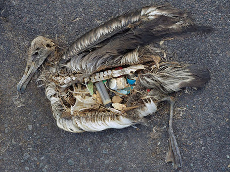 Our Oceans Are Drowning In Plastic | OUR OCEANS NEED US | Scoop.it