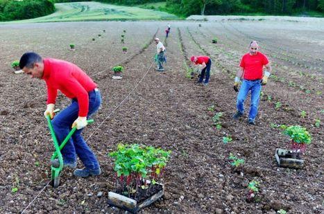 Les anciennes terres viticoles de Dijon - la réponse pour les producteurs de Crémant de Bourgogne? | Le Vin et + encore | Scoop.it
