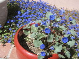 GV Gardeners: Autumn brings new beginnings to garden | Green Valley (AZ) News and Sun | CALS in the News | Scoop.it