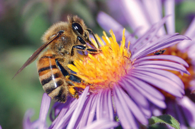 Bees: Love Them or Hate Them,You Need Them - eco18: Green Living and Healthy Lifestyle | Share Some Love Today | Scoop.it