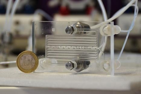 Viticulture : des chercheurs bordelais conçoivent un capteur à sulfites et un micro-réacteur à phéromones | Winemak-in | Scoop.it
