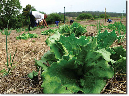 Stories from our Food Gardens (free e-Book) | Think Like a Permaculturist | Scoop.it