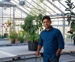 Discovery offers bio-solution to severe canola crop losses | Sustain Our Earth | Scoop.it