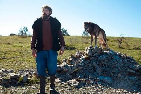Qui a peur du grand méchant loup? | L'Hebdo | Loup | Scoop.it