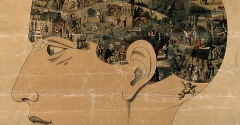 The Social Brain   Cognitive Awareness   Scoop.it