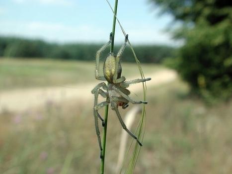 Nejjedovatější pavouk se přemnožil, útoky hrozí prakticky všude | Středočeský výběr | Scoop.it