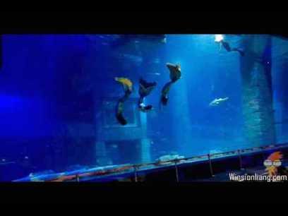 [Video] No Oxygen tank ! Dreamlike sexy mermaid dive show under 10 meter water | Winsion | Scoop.it