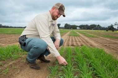 UF/IFAS study: Wheat yield to decline as temperatures increase - agprofessional.com | actualité | Scoop.it