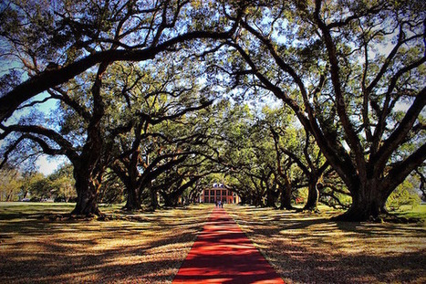 Louisiana's Oak Alley Plantation | Oak Alley Plantation: Things to see! | Scoop.it