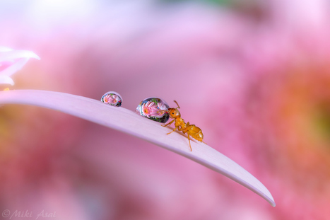 Prize by Miki Asai | I didn't know it was impossible.. and I did it :-) - No sabia que era imposible.. y lo hice :-) | Scoop.it