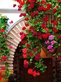 The Geraniums of Cordoba, Spain | Anything Goes in the Garden | Scoop.it