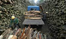 China at the centre of 'illegal timber' trade | Earth's Biomes: Maintaining a Balance | Scoop.it