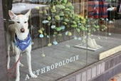 Anthropologie announces fifth annual Sit.Stay.Love. campaign | Pet News | Scoop.it