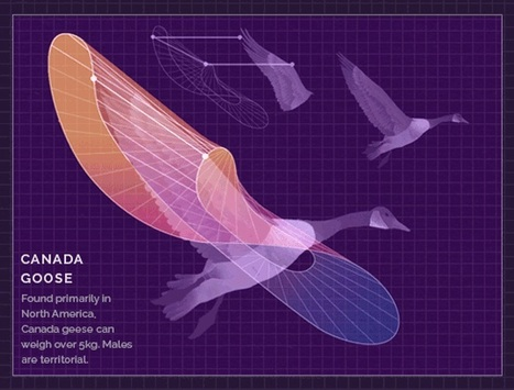 Beautifully-Animated Infographics Designed by Eleanor Lutz | TeensScienceandSoul | Scoop.it