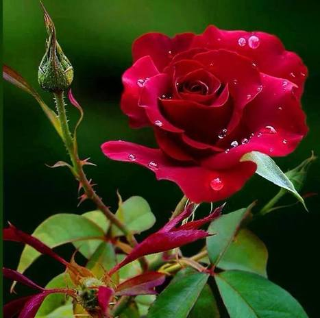 FBN, Nourishing Your Relations with the Ultimate Flower Work | Online Flower Delivery in India | Scoop.it