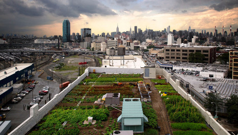 Stadslandbouw, wat is dat en welke vormen bestaan er? | Anders en beter | Scoop.it