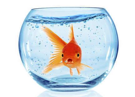 'Minder concentratie dan een goudvis door apparaten'   Mediawijsheid in het VO   Scoop.it