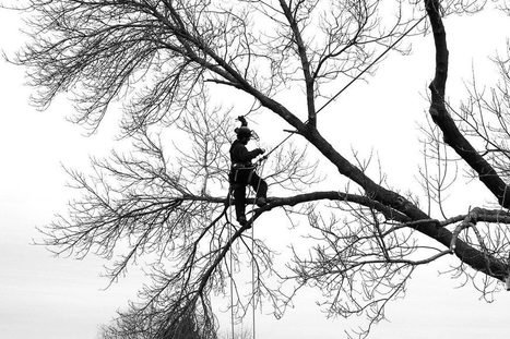 OSHA points to qualification for tree trimming safety | treetools | Scoop.it