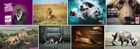 Les meilleures publicités mettant en scène les animaux   Humour et pub détounée   Scoop.it