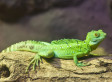 New 'Pain-Free' Bandage Idea Inspired By Spider Webs And Gecko Feet | Strange days indeed... | Scoop.it
