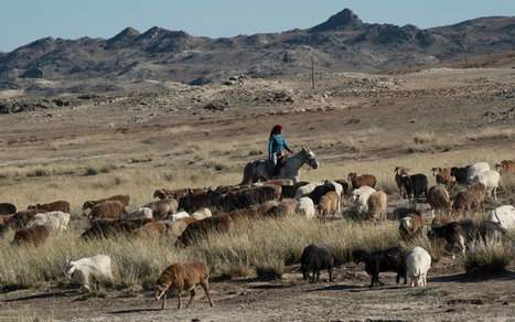 China Fences In Its Nomads, and an Ancient Life Withers | Geography Ed | Scoop.it