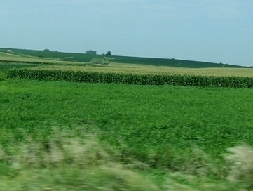 King Corn Mowed Down 2 Million Acres of Grassland in 5 Years Flat | Local Food Systems | Scoop.it