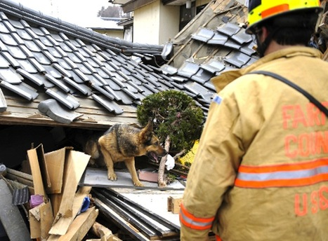 Believe In Dog: Canine Rescue Teams Aid Japan | Animals Around The World | Scoop.it