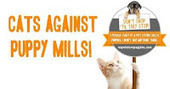 Bunny's Blog: Join Cats Against Puppy Mills! | Pet News | Scoop.it
