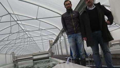 Valhuon : ils sont (presque) les seuls à cultiver des algues… et à vous les vendre! | Valorisation des algues | Scoop.it