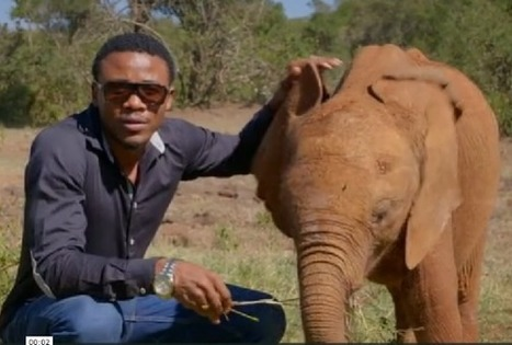 WildAid Launches Major Elephant Campaign in Tanzania with Alikiba | Wildlife Trafficking: Who Does it? Allows it? | Scoop.it