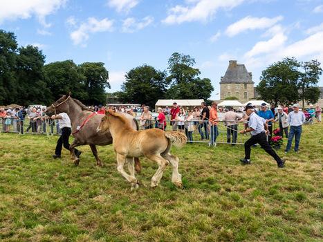 balade photo en Finistère, Bretagne et...: cheval breton : concours au château de Kerjean (17 photos) | photo en Bretagne - Finistère | Scoop.it
