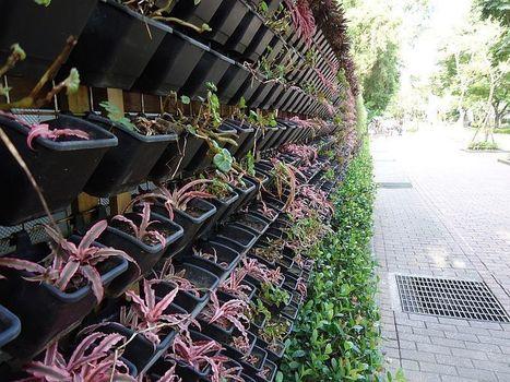Vermont Garden Journal: Vertical Gardening - Vermont Public Radio | Wellington Aquaponics | Scoop.it