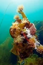Marine PA Report backs sea protection network | Blue Planet | Scoop.it