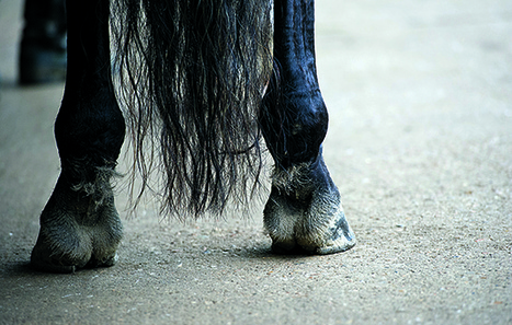 Serological comparison among various strains of... | EQUINE SCIENCE | Scoop.it