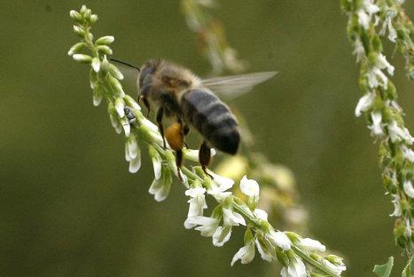 Parrainer une ruche pour sauver des abeilles | Apiculture et protection de l'environnement | Scoop.it