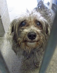Scruffy dog tries to smile in face of adversity | Nature Animals humankind | Scoop.it