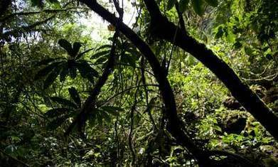 Welsh charity saves an area of rainforest the size of Wales | Forests | Scoop.it