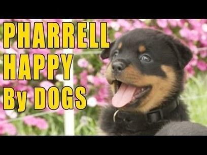 Pharrell - Happy (Puppy & Doggy Version)   network marketing   Scoop.it