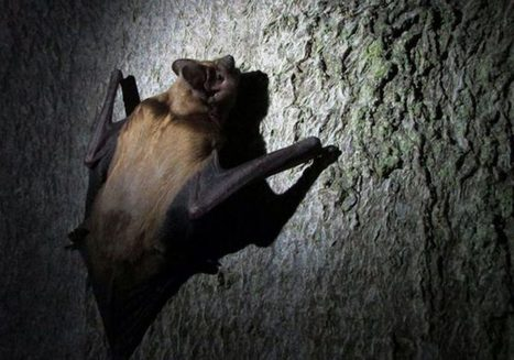 Paper Review – Habitat use by Noctule bats in a landscape with a high density of wind turbines | Nature | Scoop.it
