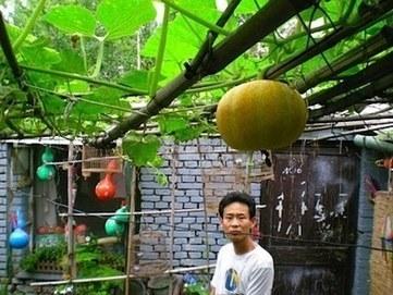 L'agriculture urbaine commence à séduire les chinois des villes | Économie circulaire locale et résiliente pour nourrir la ville | Scoop.it