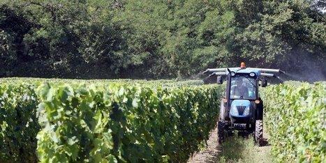 Gironde : les vignerons attendent eux aussi le soleil - Sud Ouest | Oenotourisme en Entre-deux-Mers | Scoop.it