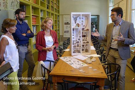 Chantier du Muséum d'histoire naturelle : tout va bien !!! | Bordeaux Gazette | Scoop.it