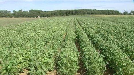 Agriculture bio: faire plus et mieux - Francetv info | Gastronomie et alimentation pour la santé | Scoop.it