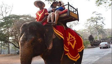 Elephant Dies While Giving Tourists A Ride In Scorching Heat | Nature Animals humankind | Scoop.it