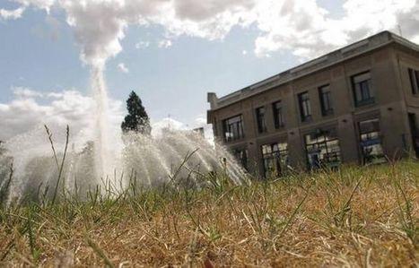 Nouvelle République : Les espaces verts au régime sécheresse - environnement | ChâtelleraultActu | Scoop.it