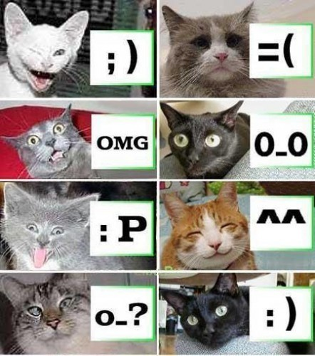 Emoticats | Epic pics | Scoop.it
