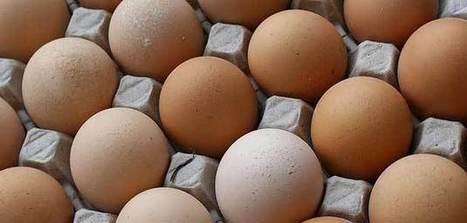 Oeufs Matines : l'entreprise veut doubler ses ventes d'œufs en GMS - Agro Media | Actualité de l'Industrie Agroalimentaire | agro-media.fr | Scoop.it