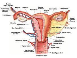 Some Common Reasons for Infertility in Women | Best Hospital in Delhi | Scoop.it