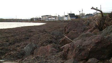 Summerside veut transformer des algues en biocarburant | ICI.Radio-Canada.ca | Algues et énergies | Scoop.it