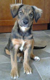 Pictures of Puppies   Online Help   Scoop.it